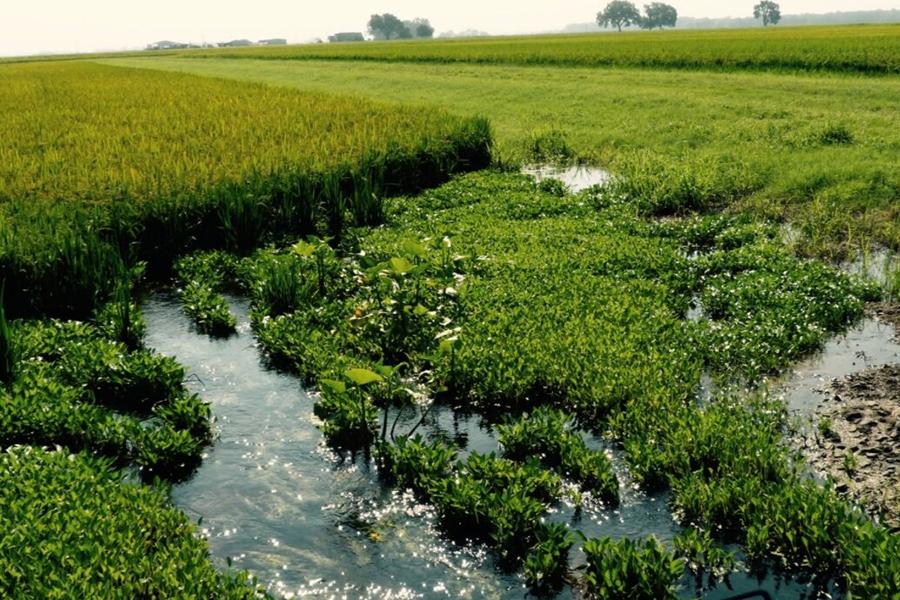Sustainability/watering.jpg